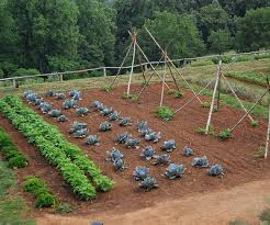 after placing the weed map and assembled frame down on the ground you can next put in the soil the recommended square foot gardening soil is a mixture of