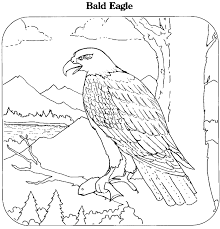 Small Picture Eagle The Art Gallery Bald Eagle Coloring Page at Coloring Book Online