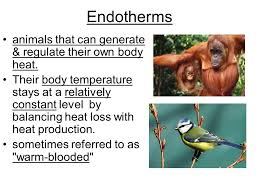 Endothermy Vs Ectothermy Venn Diagram Homeostasis The Physical Process That Maintains A Stable