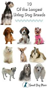 Longest Living Dog Breed Chart Longest Living Dog Breeds List How To Extend Your Dogs