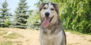 orillia top dog names