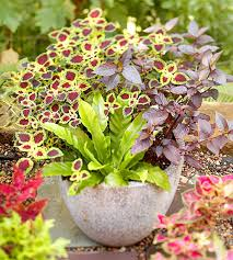 Small Picture Container Garden Design Basics