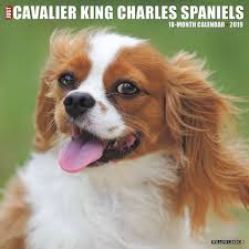 just cavalier king charles wall calendar calendars books gifts
