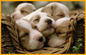 1920x1200 pc 872 puppy wallpapers hd photo collection