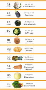 True Fruit Chart For Pregnancy Fetus Fruit Chart Baby Fetus