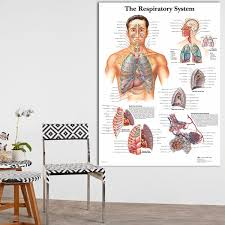 2019 Diagram Of Respiratory Systems Anatomical Anatomy Charts Canvas Print Poster Wall Pictures For Medical Education Home Decor No Frame From