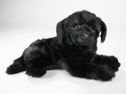boatswain dog. \ boatswain dog e