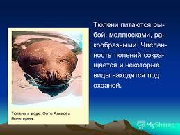 Презентация на тему Красная книга Окружающий мир класс  5 Тюлени питаются ры бой моллюсками ра кообразными Числен ность тюлений сокра щается и некоторые виды находятся под охраной