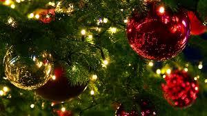 Star Nursery Dr Q Christmas Trees Selection and Care 2017