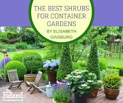 best shrubs for container gardens