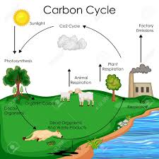 Carbon Cycle Flow Chart Education Chart Of Biology For Carbon Cycle Diagram