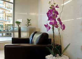 tropical office plants. Top Eight Tropical Office Plants