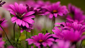 Beautiful Flowers Wallpapers For ...