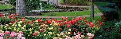 tyler flowers header image