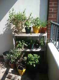 Thrifty DC Cook Update On Our Balcony Herb Garden
