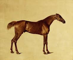 equestrian painting rufus by george stubbs
