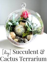 the inspiration for this challenge came from there are so many gorgeous terrariums but i thought i could try to diy one at home for less