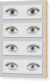 Iris Color Chart Eye Color Chart In Dominant Order Of Occurrence Brown Green Blue And Gray Isolated Vector Illustration On White Background Wood Print