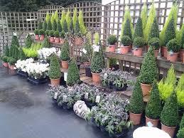 topiary plants anitas garden centre easton in gordon bristol