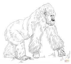 Silverback Gorilla Kleurplaat Gratis Kleurplaten Printen