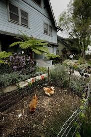 home garden transformation