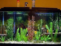 Small Fish Bowl Decorations Enchanting Small Fish Tank Ideas 60 For Modern Home With Small 31