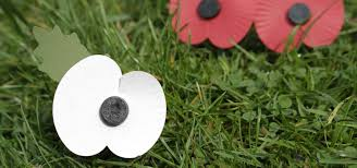 distribution of white poppies in s causes controversy co operative news