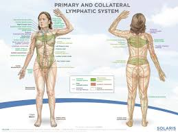 Dry Skin Brushing Chart Dry Brushing For Lymphedema Does It Really Work