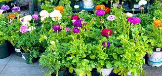 apartment patio garden. Brightly Colored Potted Flowers Outside In The Sun. Apartment Patio Garden