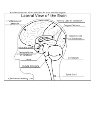 Label the brain anatomy diagram lateral view of the brain labeled rh anatomyofdiagram diagram of brain with labels and definitions memory brain diagram