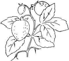Drie Aardbeien Aan Een Tak Kleurplaat Gratis Kleurplaten Printen