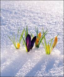 Garden Design with Winter Safety: Handling Ice and Protecting Plants Winter  Season