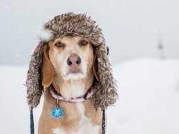 Cold Weather Care - Tips for Dogs with Dry, Itchy skin - earthbath ®