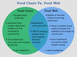 Producers And Consumers Venn Diagram Whats The Difference Between Food Chain And Food Web
