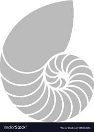 Image result for nautilus shell