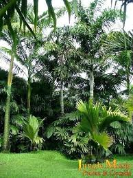 Small Picture Tropical Landscaping Designs bowhuntingsupershowcom