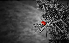 black and white photography with color wallpaper. Brilliant Photography B And W Shot Coloring Ladybug To Black And White Photography With Color Wallpaper L