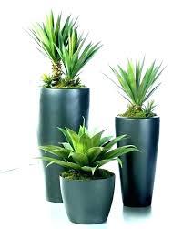 low light plants indoor best large indoor plants tall house plants best indoor house plants indoor plants low light modern pots for indoor plants tall house