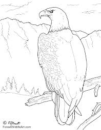Coloring Pages Yahoo Image Search Results