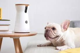 automated pet care products.  Products The Furbo Dog Camera Is Just One Of A Handful Home Tech Objects On The  Market Right Now Inside Automated Pet Care Products P