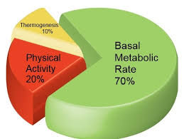 Bmr Levels Chart Bmr Calculator For Weight Loss