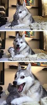 15 Pun Husky Meme Jokes are Insanely Cute - Dose of Funny via Relatably.com