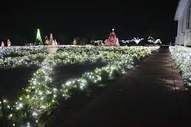 coastal georgia botanical gardens annual display lights up the night news savannah morning news savannah ga