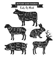 Deer Meat Chart Butcher Guide Cuts Of Meat Diagram Stock Vector