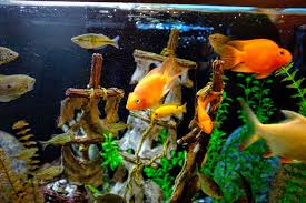 Learn How to Manage Nitrates in Your Aquarium. Freshwater Fish Health