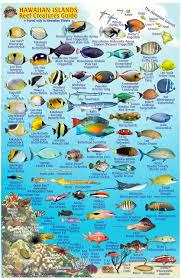 Oahu Fish Chart Hawaiian Islands Map Coral Reef Creatures Guide Franko
