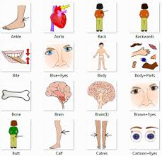 Body Part Chart For Toddlers 67 Eye Catching Body Parts Name With Pictures