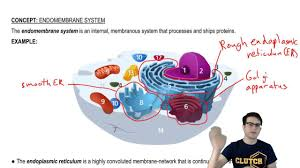 Endomembrane System Flow Chart Endomembrane System Overview