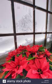 Fenster Mit Weihnachtsstern Im Winter Im Timberline Lodge