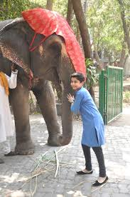 neel sethi feeding bananas to a elephant at the deans bungalow jpg caption neel sethi n american child actor who essays lead in the jungle book